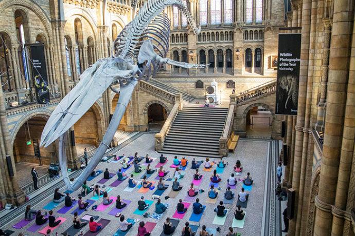 yoga natural history museum
